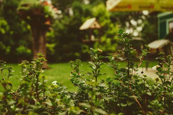 Porządki w ogrodzie Resko